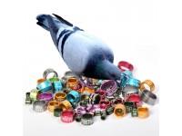 Кольца для голубей