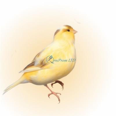 КОЛЬЦА для канареек, попугаев ПЛАСТИК с лазерной гравировкой, цвет БЕЛЫЙ